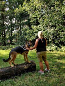 Vrijwilliger van Kwispel tegen Kanker wandelt met hond en kankerpatiënt door Gent